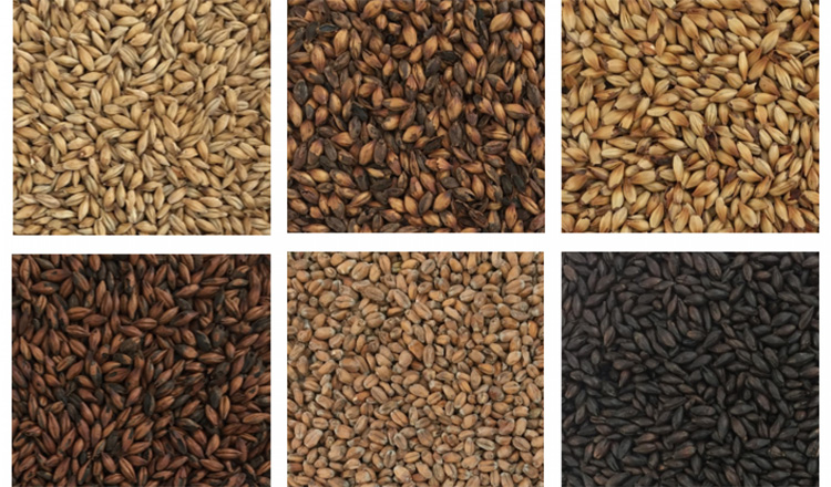 How to select the high quality barley for beer brewing?