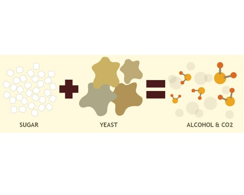 Yeast, the raw material for craft beer brewing