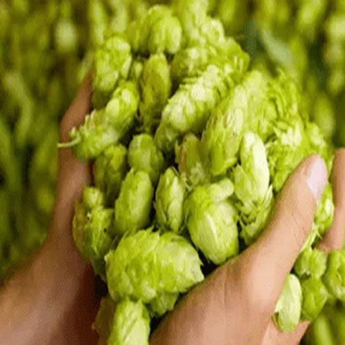 The addition of hops and the maturity of beer after fermentation, what factors should we consider for beer business?